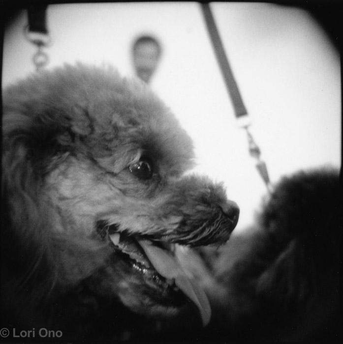lori-ono-amusement-minatomirai-yokohama-polaroid-holga-dog