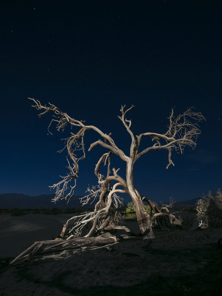 night photo of skeletonize  tree on the sand dunes of Death Valley, CA